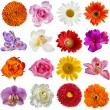 Flower heads set isolated on white background - Stok fotoraf