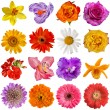 Flower heads set isolated on white background - Stock Photo