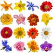 Flower heads set isolated on white background — Stock Photo #15843069