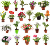 Beyaz arka plan üzerinde izole çiçek houseplants çiçek tencerede topluluğu — Stok fotoğraf