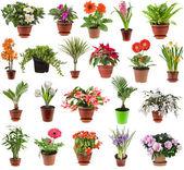 Coleção de plantas de flor no vaso de flores, isolado no fundo branco — Foto Stock