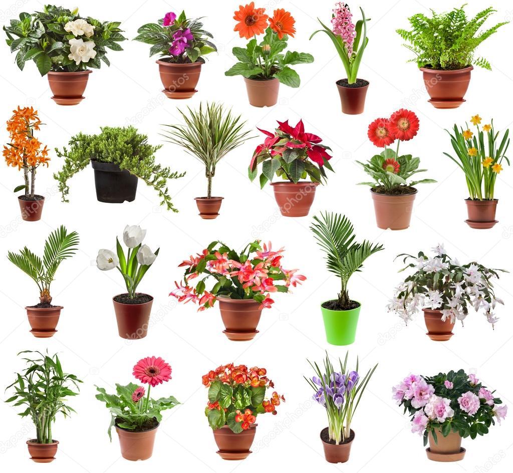 花卉盆栽植物花盆,在白色背景上孤立的集合