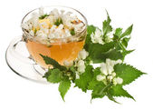 Herbal tea with flowers nettle on white background — Stock Photo
