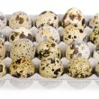 Spotted quail eggs in box isolated on white background - Stock Photo