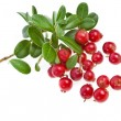 Collection fresh cranberries isolated on white background - Stock Photo
