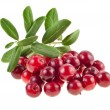 Cowberry isolated on white background - Stock Photo