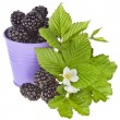 Tasty blackberry dewberry berries with flower bloom in a color bucket isolated on white background — Stock Photo
