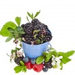 Tasty bramble dewberry berries with flower bloom isolated on white background — Stock Photo