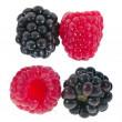 Blackberries (dewberries) with raspberries on white backgrounds — ストック写真
