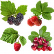 Collection of forest berries isolated on a white — Stock Photo #15893755