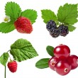 Collection of forest berries isolated on a white — Stock Photo