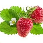 Fresh strawberry fruits isolated — Stock Photo #15895245