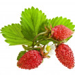 Fresh strawberry fruits isolated — Stock Photo
