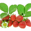 Fresh strawberry fruits with flowers and green leaves isolated on white background — Stock Photo #15895963
