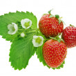 Fresh strawberry fruits with flowers and green leaves isolated on white background — Stock Photo #15896097