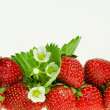 Fresh strawberry fruits with flowers and green leaves isolated on white background — Photo
