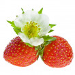 Fresh strawberry fruits with flowers and green leaves isolated on white background — Stock Photo #15896297