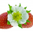 Fresh strawberry fruits with flowers and green leaves isolated on white background — Stock Photo #15896317