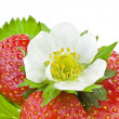 Fresh strawberry fruits with flowers and green leaves isolated on white background — Stock Photo