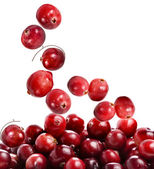 Cranberry isolated on white background — Stock Photo