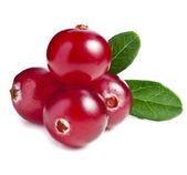 Cranberry isolated — Stock Photo