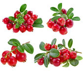 Collection fresh cranberries isolated on white background — Stock Photo