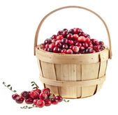 Cranberries in the basket isolated on white background — Stock Photo