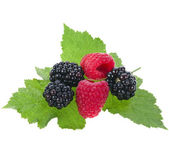 Blackberries (dewberries) with raspberries on white backgrounds — Stock Photo