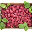 Red raspberries in the cardboard box isolated — Stock Photo #16019173
