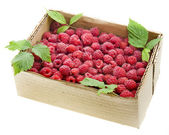 Red raspberries in the cardboard box isolated — Stock Photo