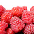 Raspberry isolated — Stock Photo #16036083