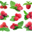 Collection red raspberries with green leafs mint isolated on white background — Stock Photo