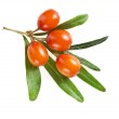 Sea buckthorn berries isolated on the white — Stock Photo