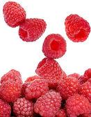 Raspberry isolated — Stock Photo