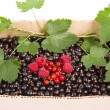 Berries of black currant in a box isolated on white background — Stock Photo