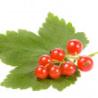 Fresh red currant isolated on white background — Stock Photo #16046637