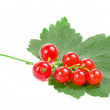 Fresh red currant isolated on white background — Stock Photo #16046681