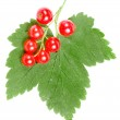 Fresh red currant isolated on white background — Stock Photo #16046745