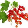 Fresh red currant isolated on white background — Stock Photo #16047481