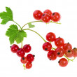 Fresh red currant isolated on white background — Stock Photo #16047507