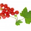 Fresh red currant isolated on white background — Stock Photo #16047531