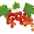 Fresh red currant isolated on white background — Stock Photo #16047549