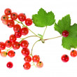 Fresh red currant isolated on white background — Stock Photo #16047567