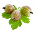 Gooseberries isolated on a white background — Stock Photo #16047655