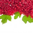 Red berries Viburnum on white — Stock Photo