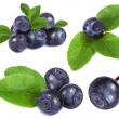 Blueberry isolated over a white - Stock Photo