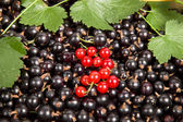 Background of ripe berries — Stock Photo