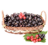 Berries of black and red currant in a basket isolated on white background — Stock Photo