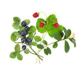 Twig blueberries, wild strawberries and cranberries — Stock Photo