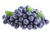 Blueberry isolated — Stock Photo